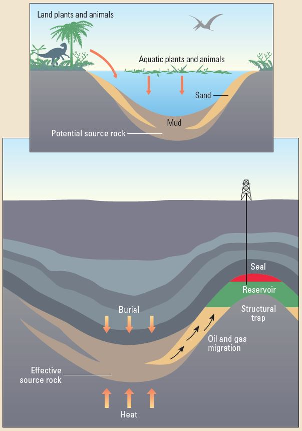 Requirements for a petroleum accumulation.